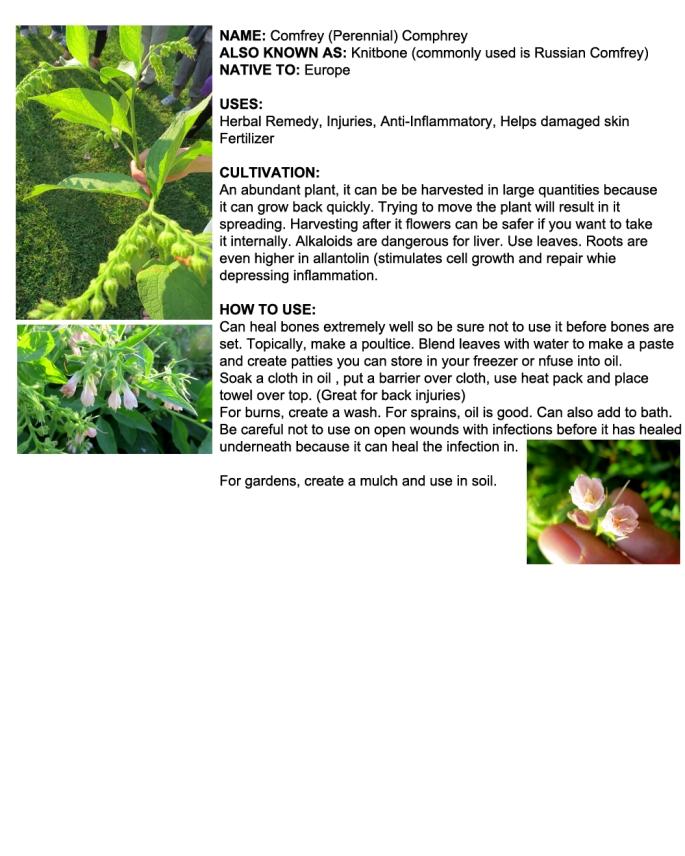 Ottawa Plants_Comfrey