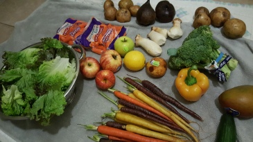 a dream lived greener zero waste food ottawa